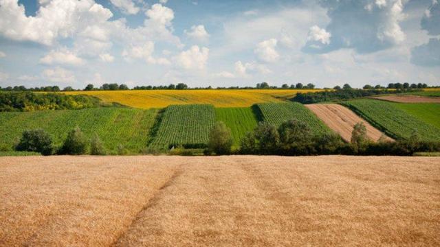 Как оформить аренду земли сроком на 49 лет
