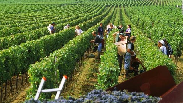 Как и кем можно уехать работать во Францию: порядок получения рабочей визы