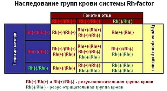 Определение отцовства по группе крови: как проводится и результаты