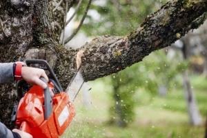 Спил деревьев на придомовой территории многоквартирного дома