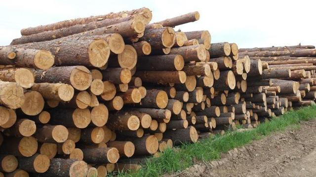 Бесплатный лес от государства - мышеловка или перспектива?